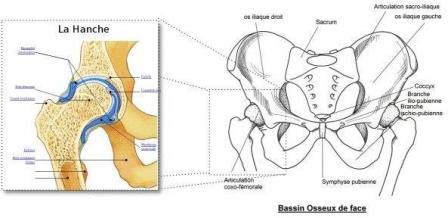 Rotation des hanches